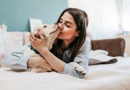 3 dicas para ter um pet em apartamento
